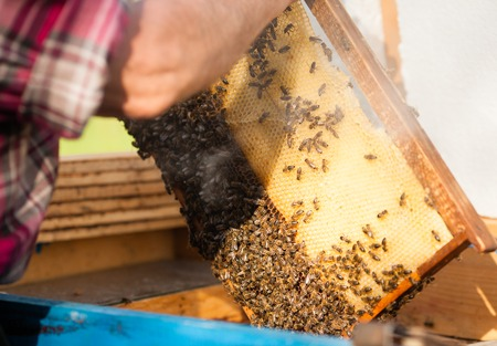 apiculture: Man engage apiculture Stock Photo