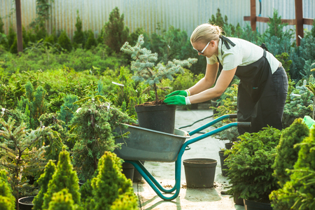 Florist-woman working with seedlings Stock Photo