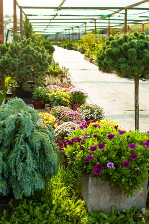 Garden Market Outdoor Stock Photo, Picture And Royalty Free Image ...