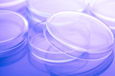 Petri dishes close up Stock Photo
