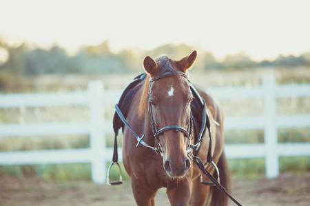 Horse on the farm Stock Photo