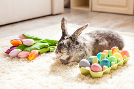 Easter rabbit in the room Stock Photo