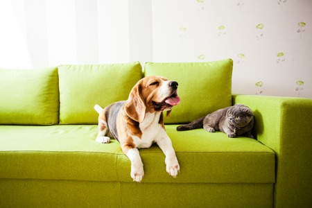pets are enjoing their life