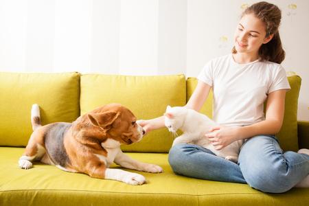 animals communication on the sofa Stock Photo
