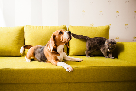 Dog and angry cat
