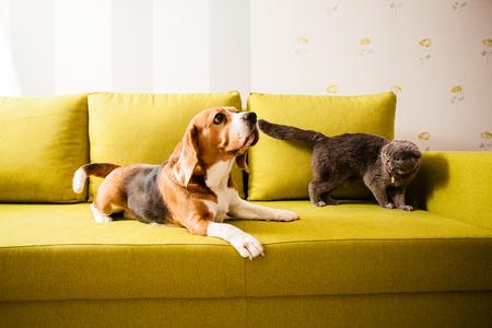 Perro y gato enojado