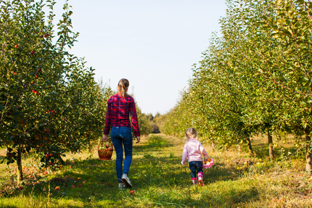 Mère et fille marchant dans le verger de pommiers