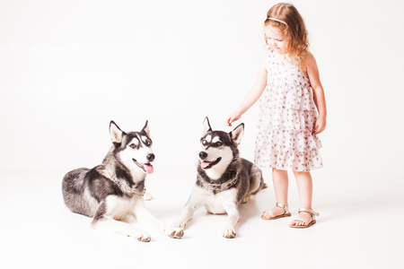 Two brothers huskies and girl isolated on white Archivio Fotografico - 115107377