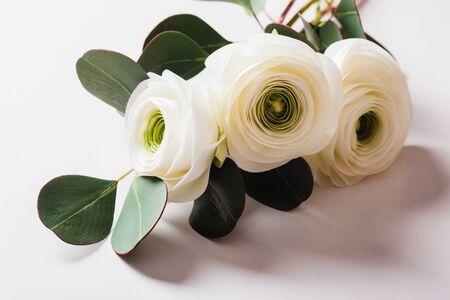 Stilisiertes Foto von Ranunkeln und Eukalyptusblumenstrauß nah oben auf weißem Hintergrund. Blumige minimale Komposition Standard-Bild