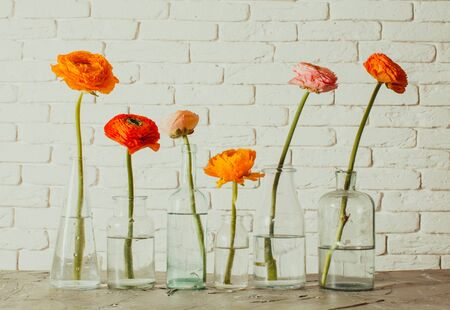 Unit yellow and red buttercup flowers standing single each in vintage glass bottle. Six small glass vases with spring flowers in them. White wall with brick texture on background