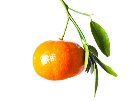 One tangerine fruit with green leaves on branch isolated 版權商用圖片