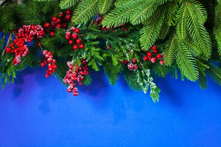 Christmas blue background with holly berry and fir branch Reklamní fotografie