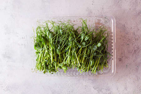 Top view transparent box with pile of cut pea microgreen, planted at home. Healthy food concept Reklamní fotografie