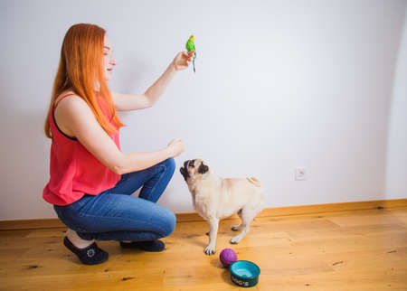 Side view of the adult red-haired girl holds a parrot on her finger overhead and a pug dog watches from below indoors