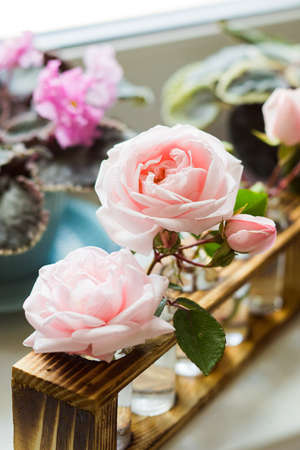 The fragrant rose oil for spa treatments