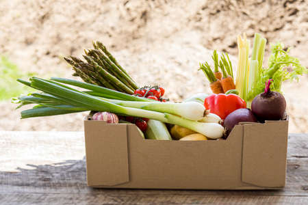 Paper box full of fresh vegetables, outdoor in summer Standard-Bild
