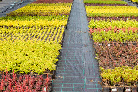 Growing plants for sell at eco-friendly farm