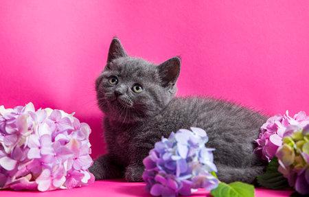 High level of cuteness, kitten in flowers