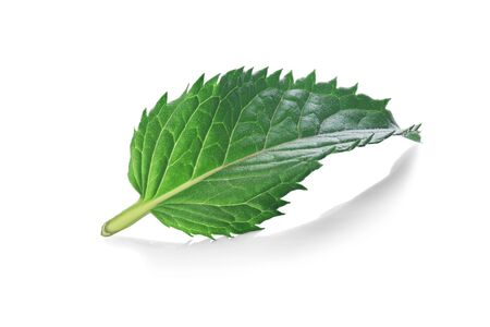 fresh peppermint, melissa, mint leaves in green color it isolated white background.