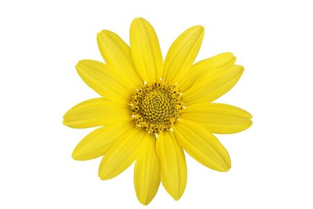 Yellow daisy flower on a white background. Stockfoto
