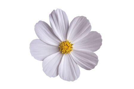 White camomile flower on a white background. Stockfoto