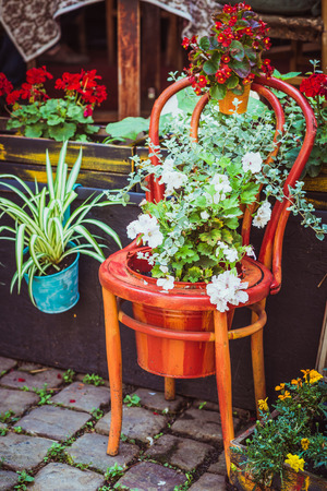 galvanised: Old wooden chair on the pavement flowerpots decorated with white and red flowers