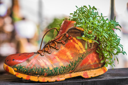 Fresh green plants growing in an old painted shoe Stock Photo