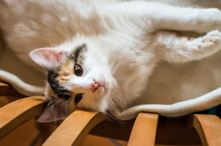 A cat on a wooden chair Stock Photo