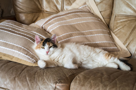 red sofa: A red white cat lying on the soft sofa near a pillows Stock Photo