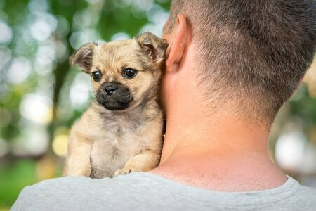 Close up of little purebred sad puppy sitting on shoulder of young man outdoors Фото со стока