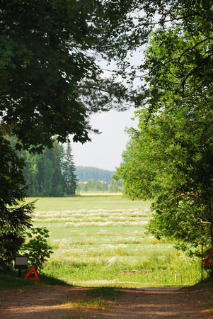 crop margin: Sunlight meadow is seen through clearing between the trees  Hay have been mowed down in the field  Stock Photo