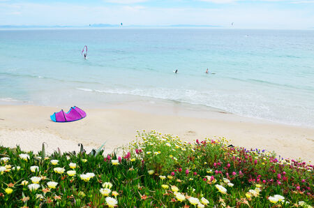 tarifa: Famous Spanish beach Valdevaqueros is photographed in spring  A kite lies on the sand  There are a kitesurfer and two persons swimming in the sea  In the foreground succulent plants are flowering on the green hill