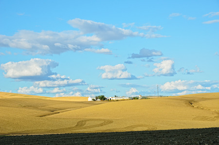 agricultural area: Andalusia is traditionally an agricultural area  The primary cultivation is dryland farming of cereals   Stock Photo