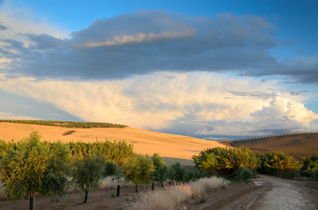 agricultural area: Andalusia is traditionally an agricultural area  The primary cultivation is arid farming of cereals  The most important tree crops are olives