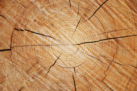 Cut of old trunk is photographed closely. The core of tree consist of growth rings and deep cracks. photo