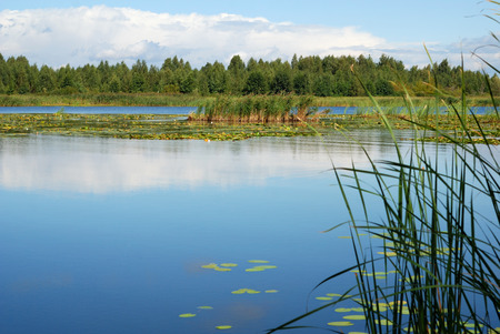 unruffled: Unruffled surface of summer lake in the middle of green trees, water plants and blue sky with white clouds Stock Photo
