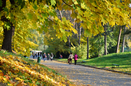 autumn in the park: Many people go a walk in the autumn park. Focus is on the maple tree in the foreground.