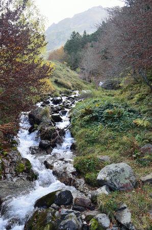 rivulet: A torrential brook d
