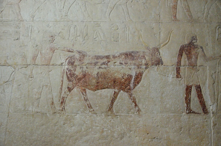 plasterwork: The most common form of fresco is the Egyptian wall paintings in tombs of Saqqara necropolis.These plaster surfaces still exist in a hard and durable state today. Stock Photo