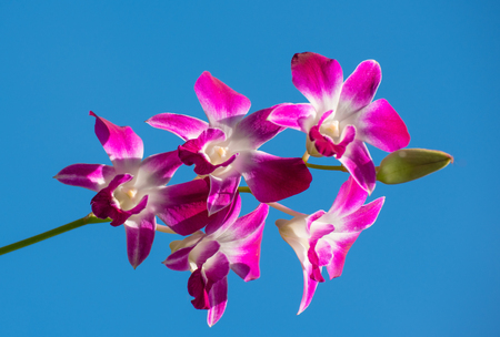 flowering: Orchid is flowering against the blue sky. It is photographed closely. Stock Photo