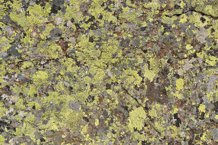 restrained: Grey stony surface is overgrown with various moss and lichens. Stock Photo