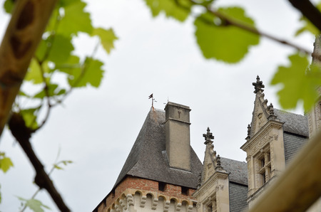 from below: Medieval chateau is photographed from below in the middle of the grapevines.