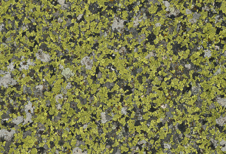 overgrown: Grey stony surface is overgrown with green moss and lichens.