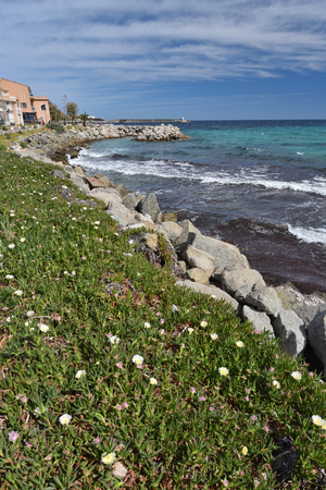 Many plants are blooming on the slope of Corsican rocky seacoast. LIle Rousse is a lively resort town and a beach with easy access to many places of interest on the Corsican inland and coast.