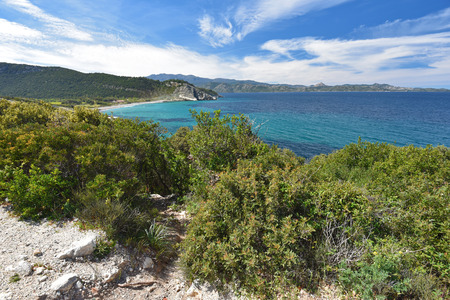 The Corsican stone coast is overgrown with evergreen thicket, known as the maquis. The maquis covers 40% of island. Stock Photo
