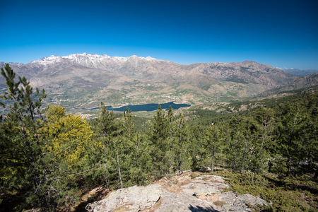 The mountain ridge of Monte Cinto with the snowy peak and the lake is photographed from the steep slope forested with pines in the natural park of Corsica.