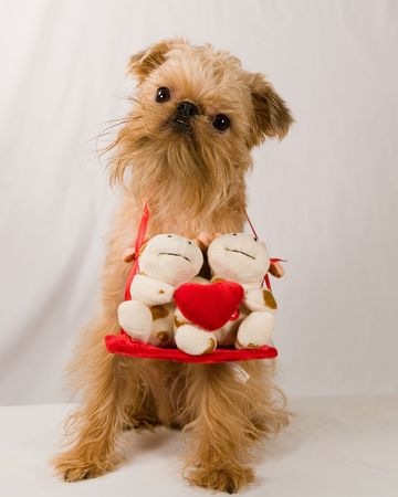 near: A doggy lies near a gift to the St Valentines day Stock Photo