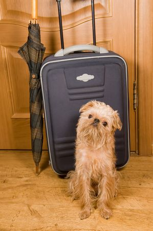 The dog sits near to a green suitcase and an umbrella, behind closed door. Stock Photo - 4500577