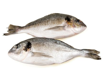 Two fish (dorade) separately on a white background. Stock Photo