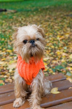Dog   sits in a park in autumn.